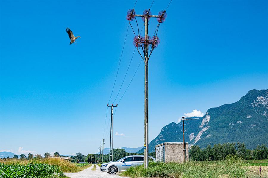 Vogel- und Kleintierschutz im Schweizer Stromnetz